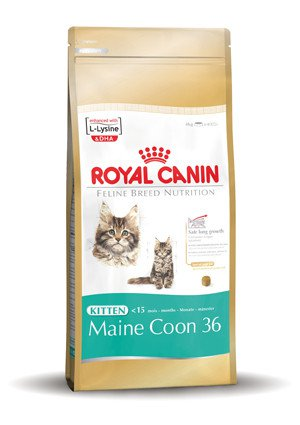Royal Canin Main Coon Kitten - 2 kg.