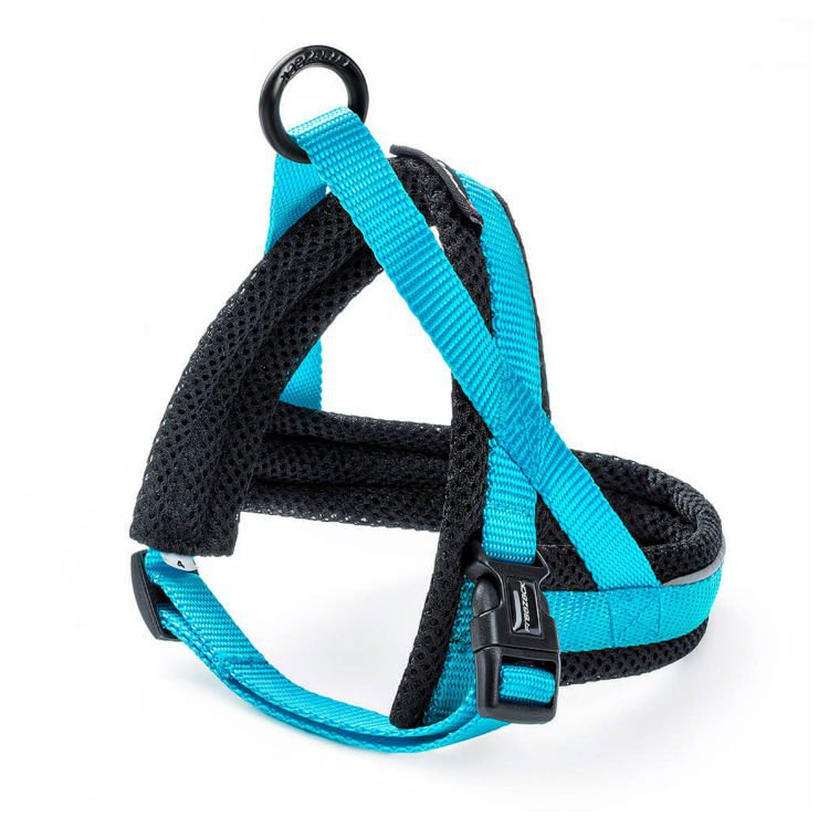 Freezack Harness Nordic Basic Turquoise Mini4